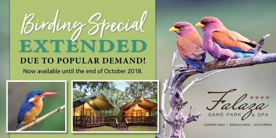 Birding special banner