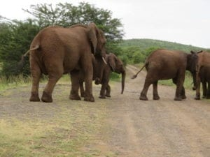baby elephant falaza