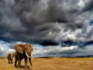 elephants at falaza